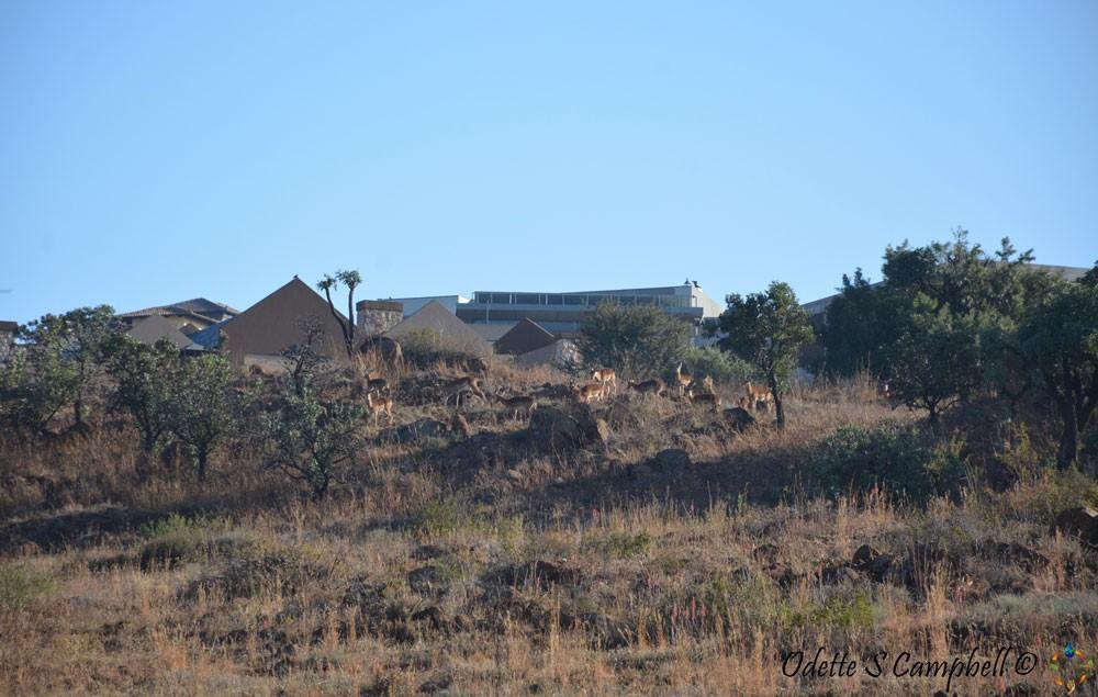 Meyerdals Eco Estate - Estate Listing