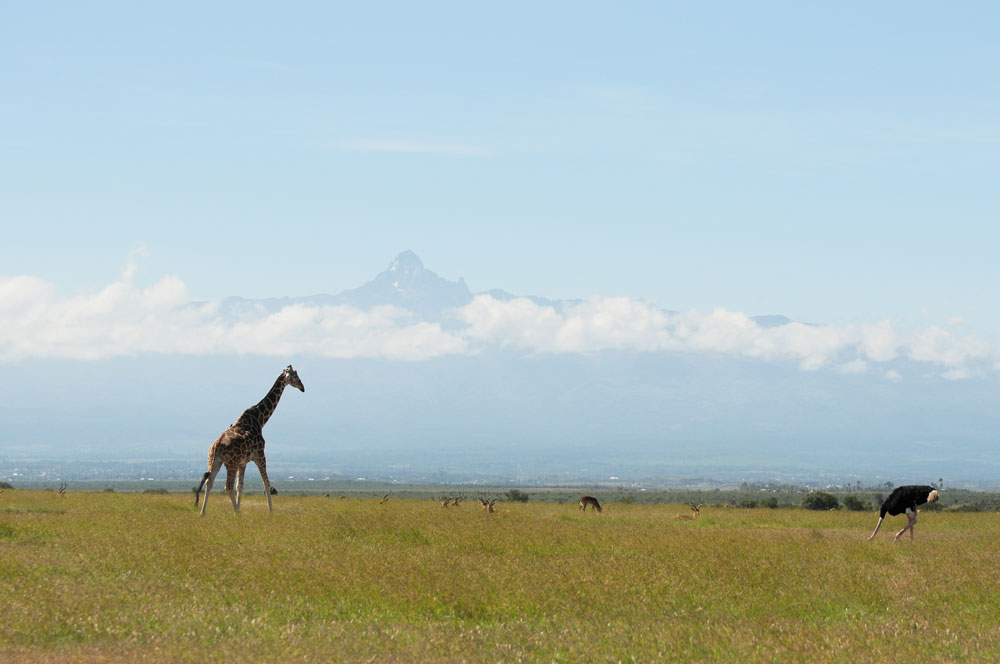 Mount Kenya Wildlife Estate - Estate Listing