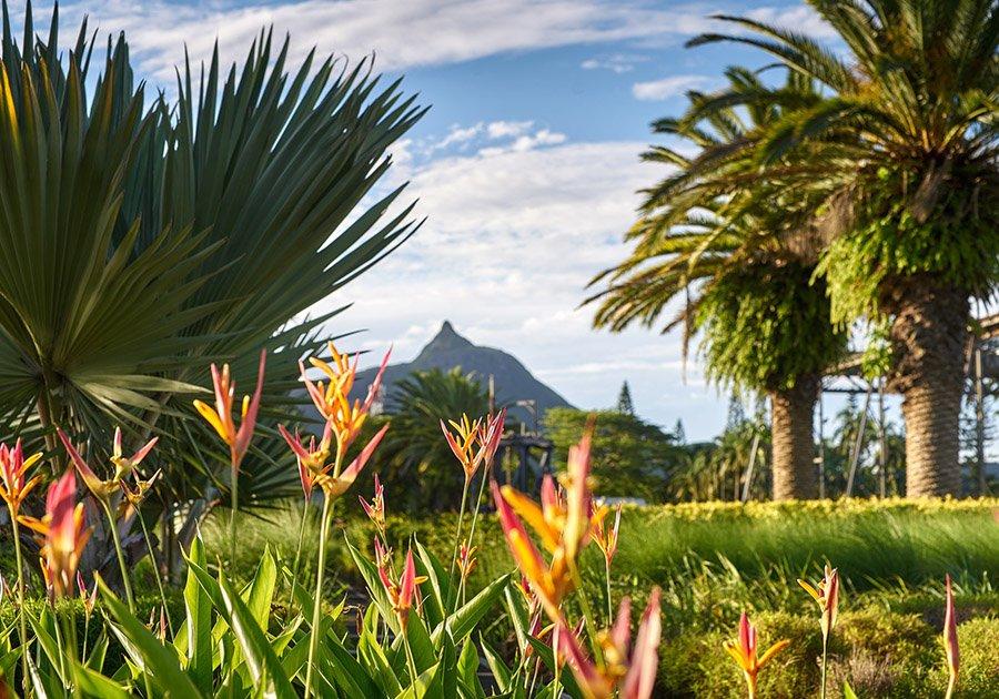 Moka City: Smartening up Mauritius