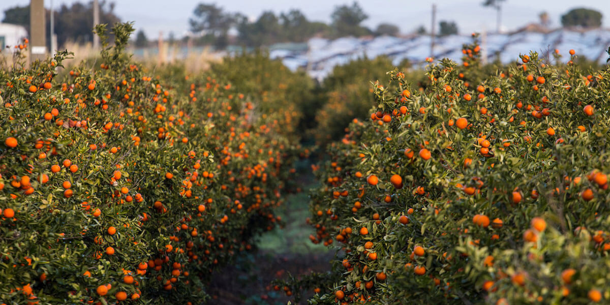 Opportunities galore for South African farmers in Portugal
