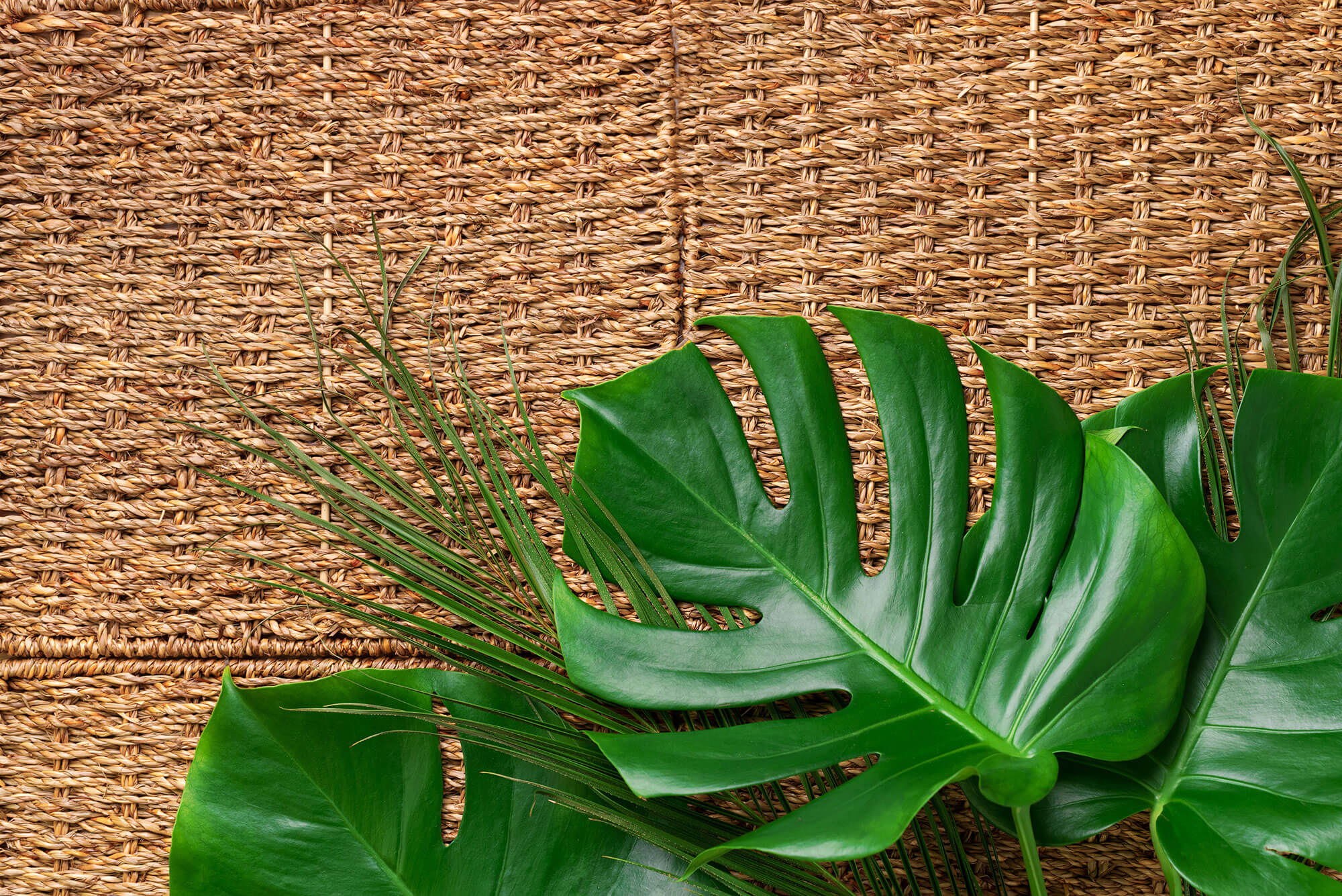 green palm and tropical monstera leaves on rattan GNAUHSY - News-old