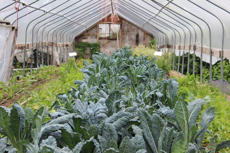Urban Farming 3 - News-old