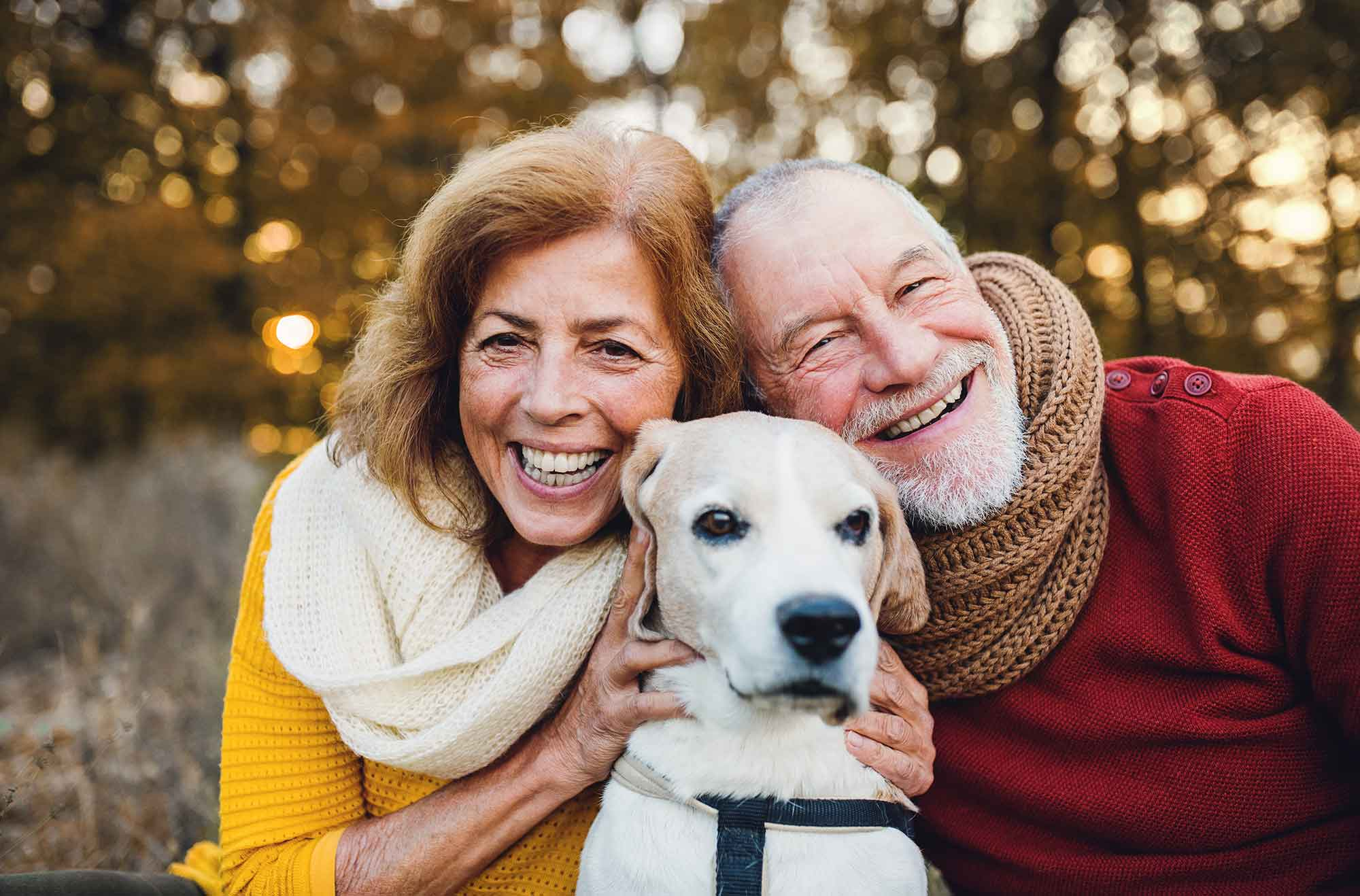 Elderly and dogs 5 - News-old